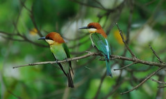 KAZ_013 (soggy_3_16) Tags: birds nikon wildlife 70300 kaziranga d90