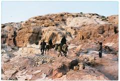 (tayn3) Tags: film analog 35mm landscape desert kodak petra middleeast olympus jordan arabia 100 analogue olympusom2 mules epic bedouin ektar 100iso olympusom2n finegrain kodakektar ektar100
