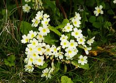 20160424-5D3_9446 (Terry Payman) Tags: garden jeannette