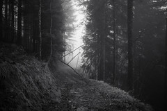 im Wald (Toni_V) Tags: leica wood bw mist monochrome fog forest schweiz switzerland blackwhite europe dof nebel suisse bokeh hiking zurich rangefinder trail mp zrich svizzera schwarzweiss wald wanderung randonne 2016 svizra escursione sep2 summiluxm leicam 35mmf14asph digitalrangefinder niksoftware 35lux messsucher 160418 silverefexpro2 35mmf14asphfle typ240 toniv m2404411 gibswilschnebelhorngibswil