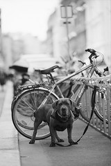 Guarding (brenkee) Tags: street dog film bicycle 35mm canon guard storage f2 ilford fp4 eos3 135mm redring llens lc29