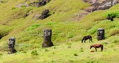 Ellos (Picardo2009) Tags: chile horses horse nature landscape caballo caballos freedom volcano ancient ruins crater ruinas civilization moai easterisland rapanui volcan picoftheday isladepascua volcanoe ranoraraku flickraward flickrtravelaward