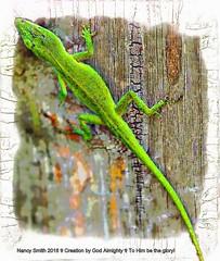 Florida Green Anole (NancySmith133) Tags: backyard floridagreenanole centralfloridausa
