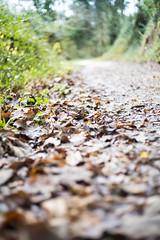 Prospettive d'autunno (mirkogiannetti) Tags: foglie autunno prospettiva