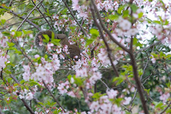 20160410-DSC_8470.jpg (d3_plus) Tags: sky plant flower history nature japan trekking walking temple nikon scenery shrine bokeh hiking kamakura fine daily telephoto bloom 日本 tele nikkor 花 寺院 自然 kanagawa 神社 寺 shintoshrine 空 散歩 buddhisttemple dailyphoto sanctuary 風景 植物 70210 thesedays kitakamakura 鎌倉 景色 歴史 fineday 神奈川県 70210mm ハイキング 日常 holyplace historicmonuments 70210mmf4 古都 zoomlense ancientcity 北鎌倉 ボケ トレッキング 晴れ ニコン ズーム 望遠 聖地 70210mmf4af 702104 d700 nikond700 歴史的建造物 aiafnikkor70210mmf4s 70210mmf4s