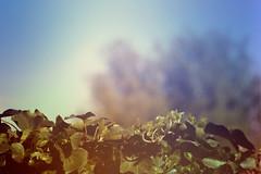 blur-dreamy-texture-texturepalace-83 (texturepalace) Tags: blur color leaves cc creativecommons dreamtextures texturepalace blurtextures