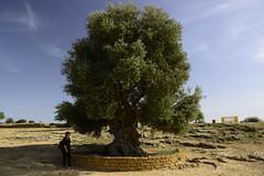 2016-04-17_16-50-39-Nikon D800 (Bernhard Kvaal) Tags: italy valley temples sicily sicilia agrigento