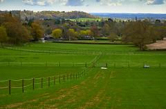 Surrey Fileds [II]/Campos de Surrey [II] (Modesto Vega) Tags: tree field nikon outdoor hill surrey earlyspring spril d600 surreyhills arrivalofspring