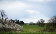 Langston Priory (judy dean) Tags: trees sheep cotswolds fields 2016 kingham judydean sonya6000 langstonpriory