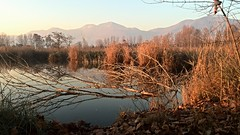 Torbiere del Sebino, Iseo, Italy (DiSorDerINaMirrOR) Tags: trees winter sunset italy nature water leaves landscape mirror italia quiet hills brescia iseo sebino torbiere iseolake