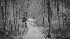 B&W-00646 (alessandro.polla) Tags: bridge blackandwhite bw italy mountains ice nature water river landscape woods iced woodbridge tentino