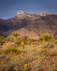 Virgin Mountain, Nevada (vertical) (Jeffrey Sullivan) Tags: travel copyright usa mountain jeff nature canon landscape photography gold march photo butte bureau united nevada virgin management mesquite land states wilderness sullivan blm 2015 5dmarkiii