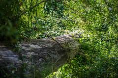 Arbol, Parque Natural Gomez Carreño (IYATA FOTOGRAFIA) Tags: chile park parque naturaleza verde green southamerica nature arbol valparaiso three viña natural vida aire trhee latinomerica gomezcarreño