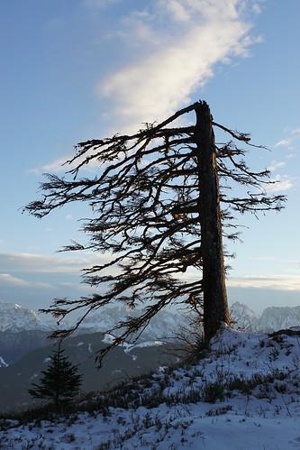 DSC01175 Tree