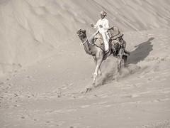Morning Camel rider (naomipics) Tags: matchpointwinner mpt493