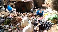 Will our erstwhile dynamic PM Modiji visit Bandra Bazar Road after inaugurating the Bandra reclamation Art Gallery (firoze shakir photographerno1) Tags: inaugration modiji makeinindia swachbharat bandrareclamationartgallery bmchward