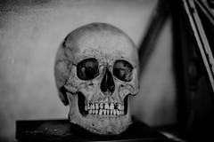 35/366 (Sbastien VASSEUR) Tags: france skull os muse lille fr nordpasdecalais projet366