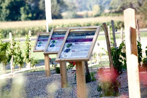 Inauguration du parcours dans les vignes