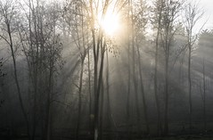 Burst and Mist (beatriceverez) Tags: trees winter sun mist fog austria rays burst
