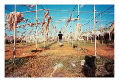 Abandoned greenhouse II (onehundrett.com) Tags: abandoned film nature analog 35mm spain loneliness kodak contax human greenhouse tenerife g2 analogue melancholy canaries destroyed deserted ektar