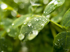 After rain (Anne Heinonen) Tags: macro green leaf raindrop