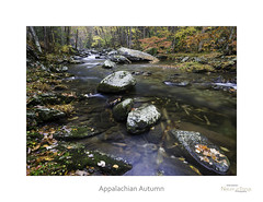 Appalachian Autumn (baldwinm16) Tags: autumn wild fallleaves usa mountains fall nature beautiful creek river outside outdoors nationalpark october stream fallcolor unitedstates tn tennessee scenic autumnleaves wilderness nationalparkservice smokies appalachia tranquil greatsmokymountains autumncolor littleriver greatsmokymountainsnationalpark flowingwater naturelandscape middleprong appalacianmountains sceniclandscape autumnlandscape