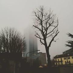 Silent hill  Milano edition #milano #fog #winter #cold #grey #skyscraper #palazzolombardia #office #saturday #tree (Matteo Ornati) Tags: square squareformat reyes iphoneography instagramapp uploaded:by=instagram foursquare:venue=4fecbcc7e4b0f4e1cfce3587