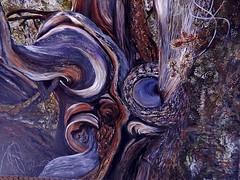 Erna Narawatl Bristlecone Pine (Pictoscribe) Tags: old white mountains tree art pine year explore ponderosa erna 4000 pictoscribe narawatil