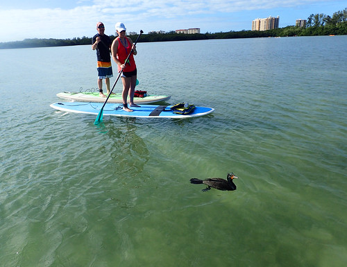 2_21_16am Paddleboard Tour FL
