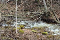 IMG_0302 ( Szczep Wodny Batyk ) Tags: zima wiosna brucetrail snieg wedrowka szczepwodnybaltyk szczepbaltyk silvercreekconservationarea wedrownicy druzyna16ta starsiharcerze