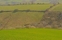 bocage basque (jean-marc losey) Tags: vert prairie paysage paysbasque aocossauiraty