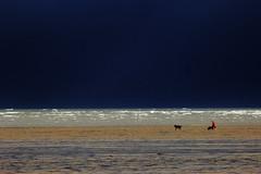 Dark Horizon (Cal Killikelly) Tags: woman storm west beach dogs water rain weather animal corner dark horizon north wirral hoylake wirralpeninsula