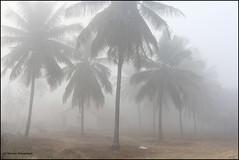 Landscape (NaveenGuruprasad) Tags: nature canon landscape natur karnataka 24105mm maravanthe kundapur canon60d