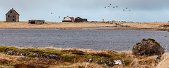Sjnarhll (holger.torp) Tags: sky lighthouse house water birds geese ruins outdoor reykjanes viti gsir rstir sjnarhll atlagageristangaviti