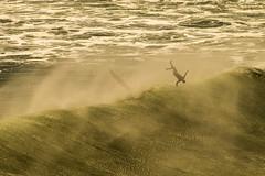 DSC_2150_P (@giovanicordioli | gmcordioli@gmail.com) Tags: brazil beach colors beautiful rio brasil riodejaneiro giant surf waves surfer xxl swell prainha bigwaves ripcurl redley osklen wsl rio2016 billabongprorio osklensurfing