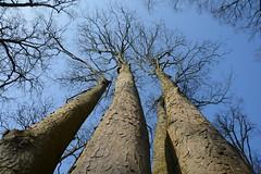 DSC_0034 (Cornelie) Tags: treetrunk bos boomstam