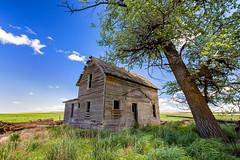Anxiety (KPortin) Tags: tree abandoned grass abandonedhouse fields douglascounty