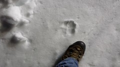 20160329_215607 (bifgul) Tags: snow wolf tracks grooming snowmobiling