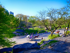 Central Park Horse and Carriage in New York City (` Toshio ') Tags: park nyc people horse usa newyork america outdoors carriage centralpark toshio xe2 fujixe2