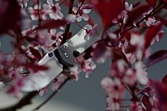 Spring Sebenza (NVenot) Tags: flowers flower lens spring day knife gear every bloom knives russian carry helios everydaycarry 442 sebenza chrisreeve helios442 smallsebenza
