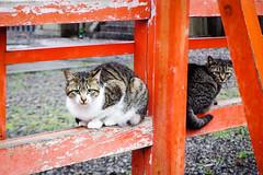 Today's Cat@2016-04-04 (masatsu) Tags: cat pentax cc100 catspotting mx1 thebiggestgroupwithonlycats