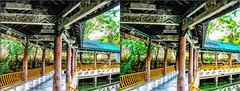 Walking On Pond (Bruno Zaffoni) Tags: china stereophotography 3d yunnan cina stereoscopy mojang