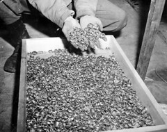 US troops, while liberating Buchenwald concentration camp in 1945, found thousands of wedding rings. [1024  812] #HistoryPorn #history #retro http://ift.tt/1VwIMY9 (Histolines) Tags: wedding camp history found us concentration buchenwald retro rings timeline while 1945 troops 812 thousands 1024  vinatage liberating historyporn histolines httpifttt1vwimy9