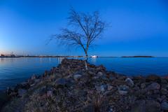 Blue Hour and a tree (Antti Tassberg) Tags: sea tree night dark landscape prime spring helsinki lowlight nightscape fisheye bluehour puu 15mm lauttasaari y kevt laru