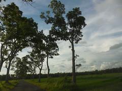 Katakan padanya! (Nurachman Hafizh) Tags: sun tree evening day feels vilage desa