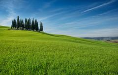 I Triboli (marypink) Tags: sky green tuscany toscana valdorcia prato cipressi triboli nikond800 nikkor1635mmf40