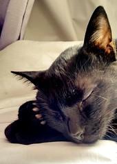 My cat friend :) (Gylzinha (=) Tags: cat blackcat friend sleep preto gato sono