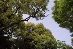 DSC00208 (koyaman3422) Tags: nikon sony 28mm harajuku