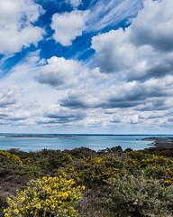 Gorse and Clouds - DSCF8364 (s0ulsurfing) Tags: nature coast fuji natural coastal april fujifilm coastline isle wight 2016 s0ulsurfing xt1