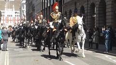 blues & royals-household cavalry mounted regiment-freedom of the city of london parade /20/04/2016/ (philipbisset275) Tags: unitedkingdom cityoflondon centrallondon bluesroyals englandgreatbritain householdcavalrymountedregiment 20042016